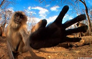 Monkey checks out camera-log
